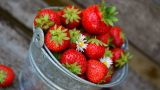 תותים-בפח