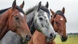 horses-1414889_1280