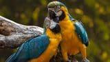 parrots-3427188_1280