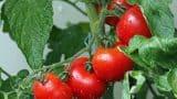 plant-1561565_1920